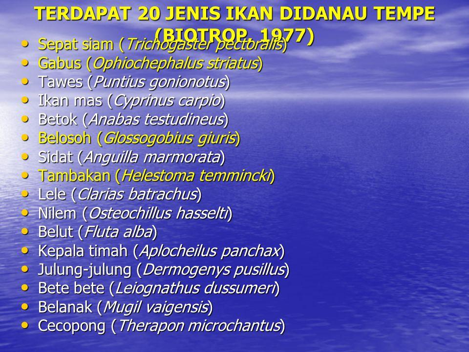 TERDAPAT 20 JENIS IKAN DIDANAU TEMPE (BIOTROP, 1977)