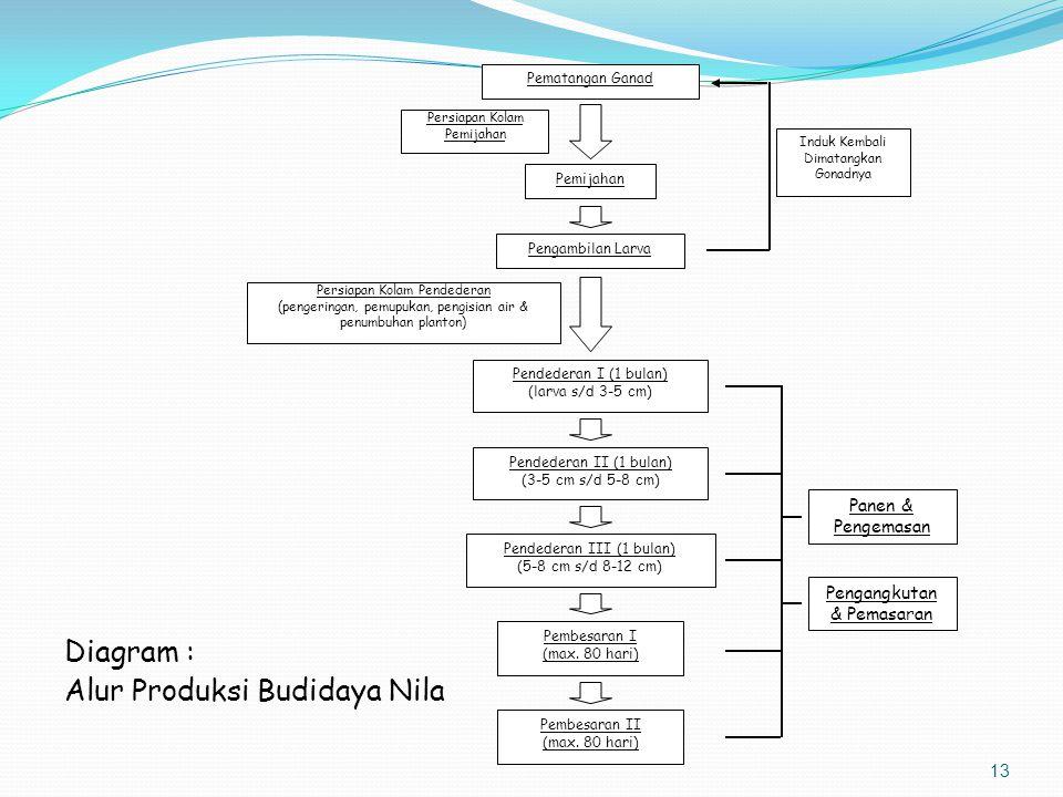 Alur Produksi Budidaya Nila