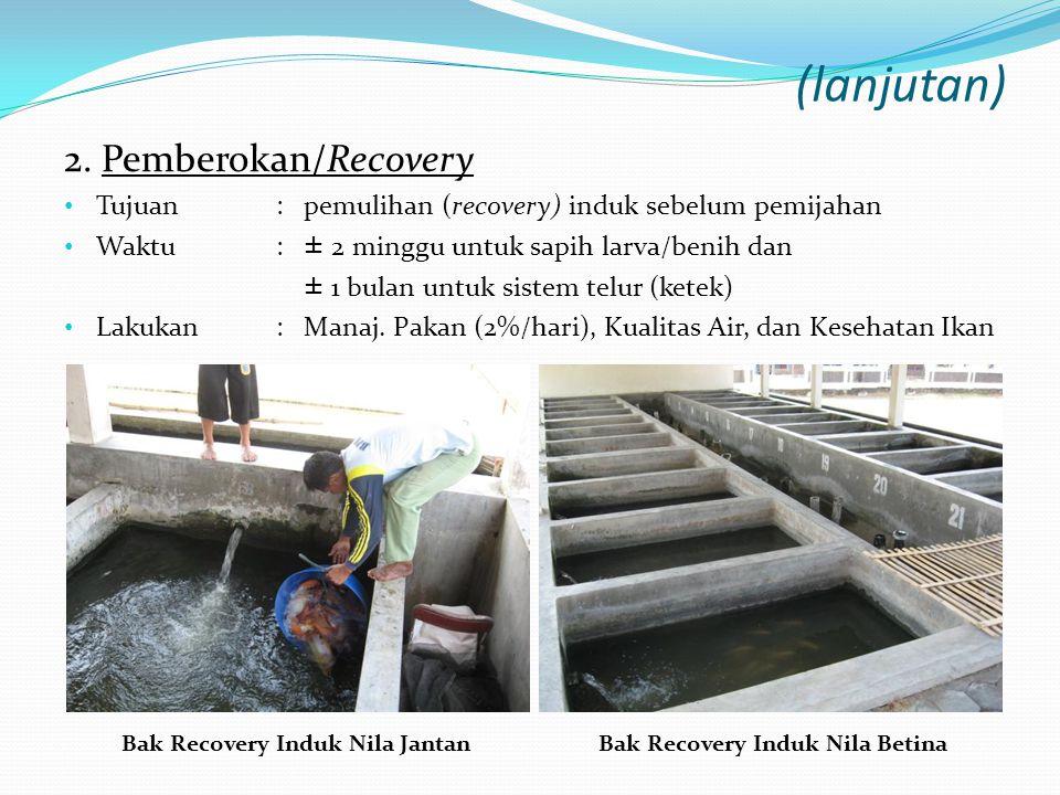 Bak Recovery Induk Nila Jantan Bak Recovery Induk Nila Betina