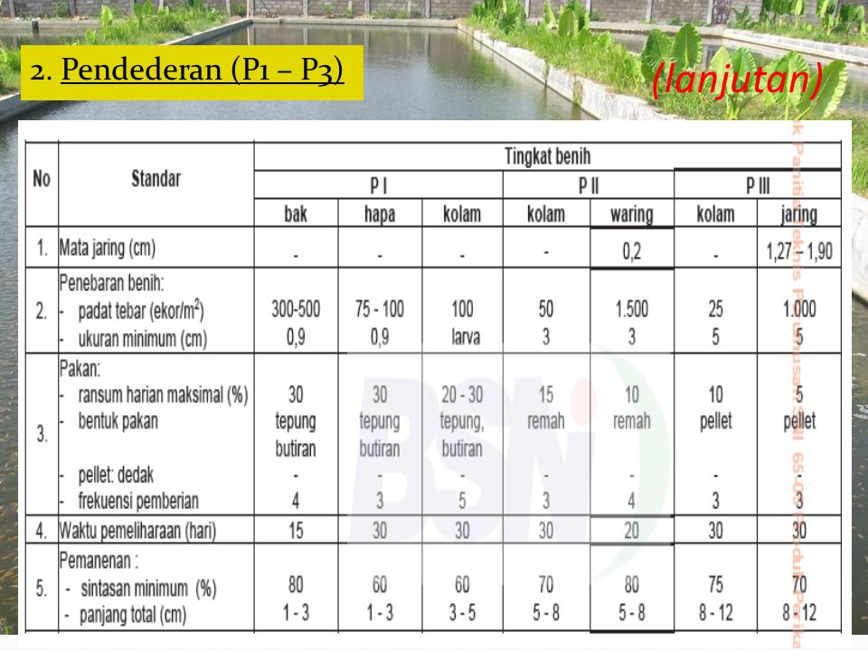 2. Pendederan (P1 – P3) (lanjutan)