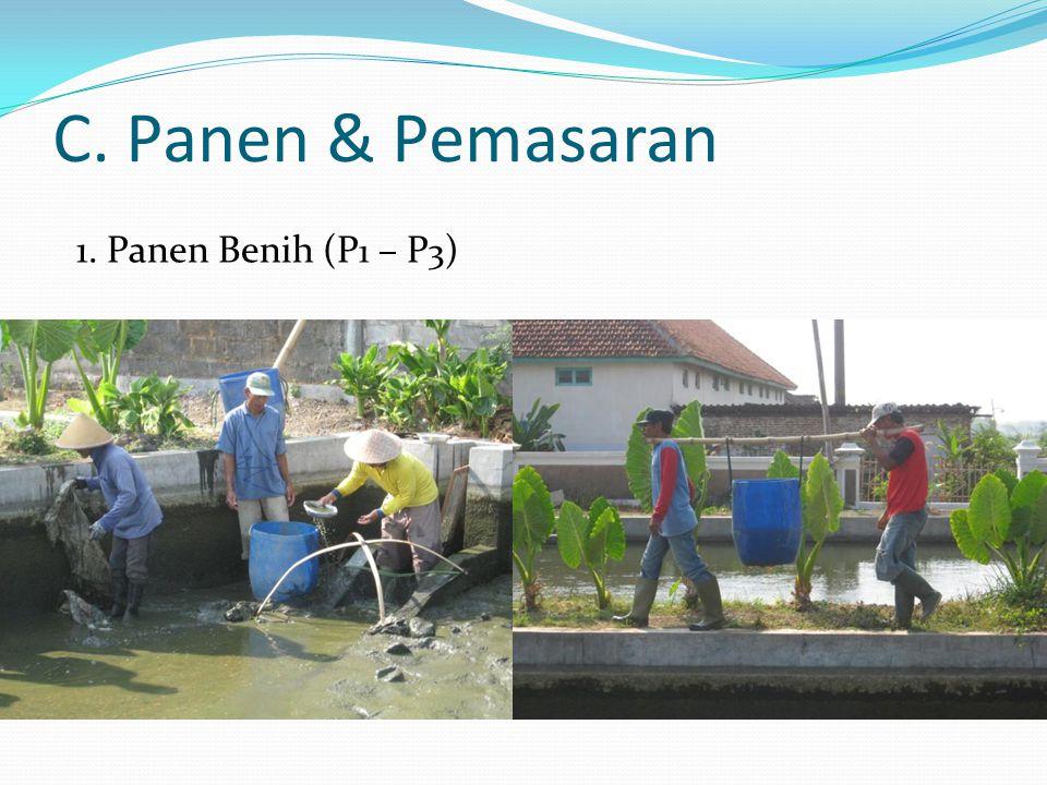 C. Panen & Pemasaran 1. Panen Benih (P1 – P3)