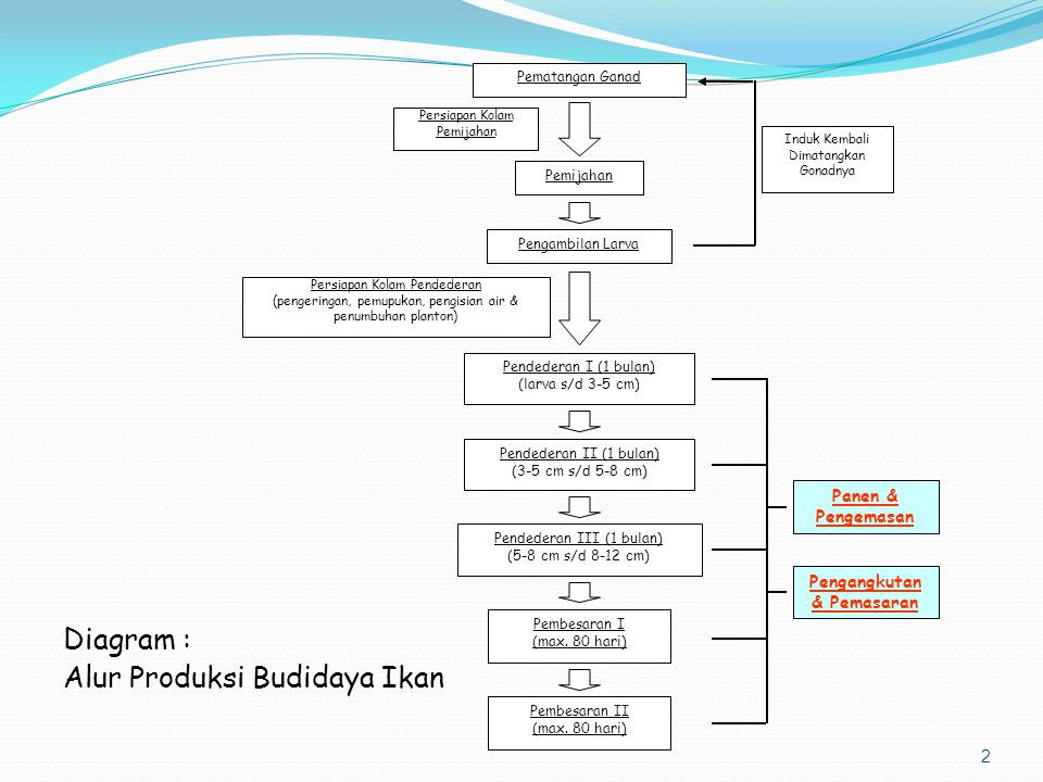 Alur Produksi Budidaya Ikan