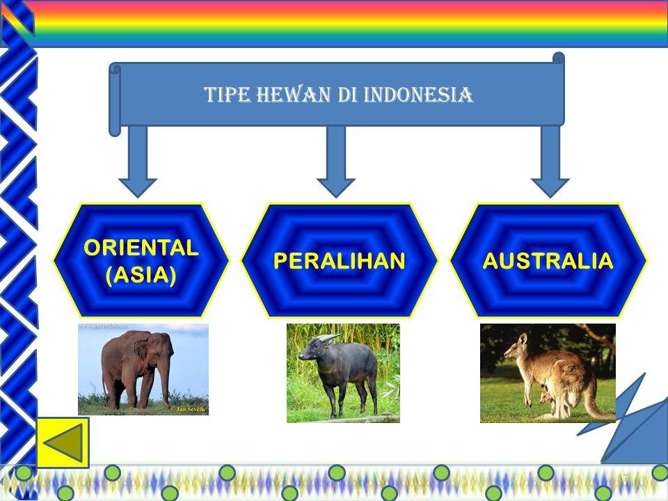 TIPE HEWAN DI INDONESIA