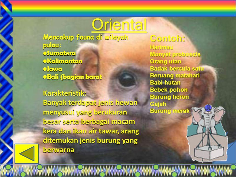 Oriental Contoh: Karakteristik: