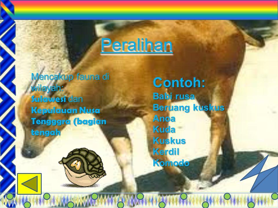 Peralihan Contoh: Mencakup fauna di wilayah: Babi rusa