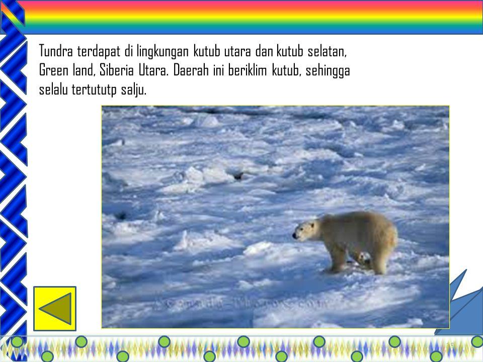 Tundra terdapat di lingkungan kutub utara dan kutub selatan, Green land, Siberia Utara.