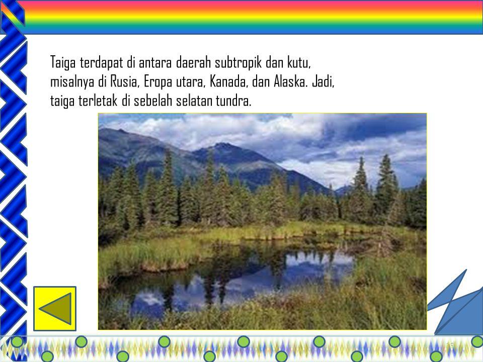 Taiga terdapat di antara daerah subtropik dan kutu, misalnya di Rusia, Eropa utara, Kanada, dan Alaska.