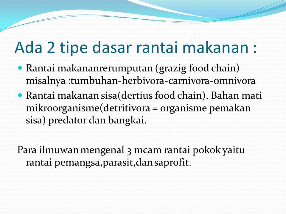 Ada 2 tipe dasar rantai makanan :