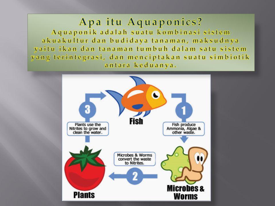 Apa itu Aquaponics.