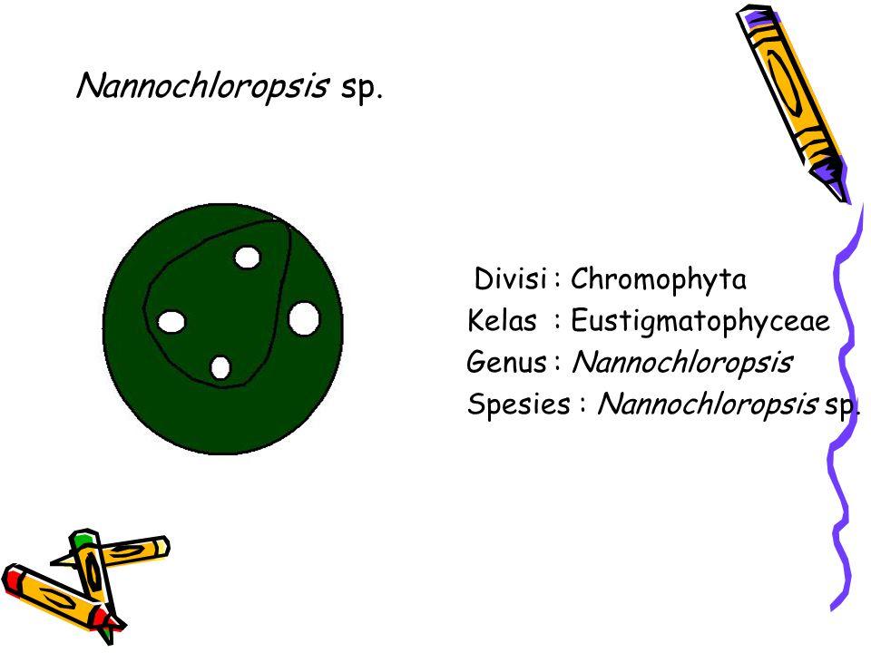 Nannochloropsis sp. Divisi : Chromophyta Kelas : Eustigmatophyceae