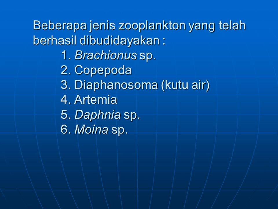 Beberapa jenis zooplankton yang telah berhasil dibudidayakan :. 1