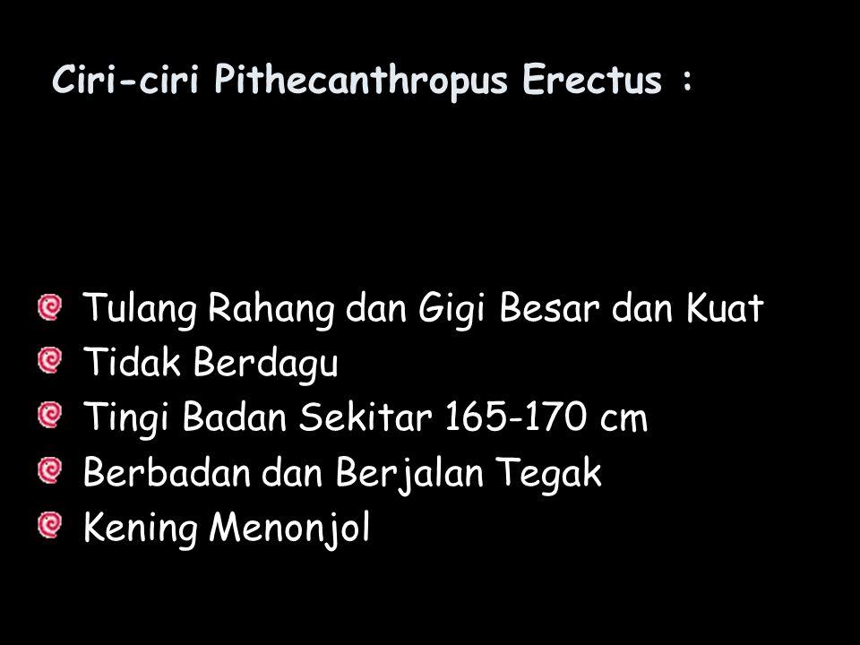Ciri-ciri Pithecanthropus Erectus :