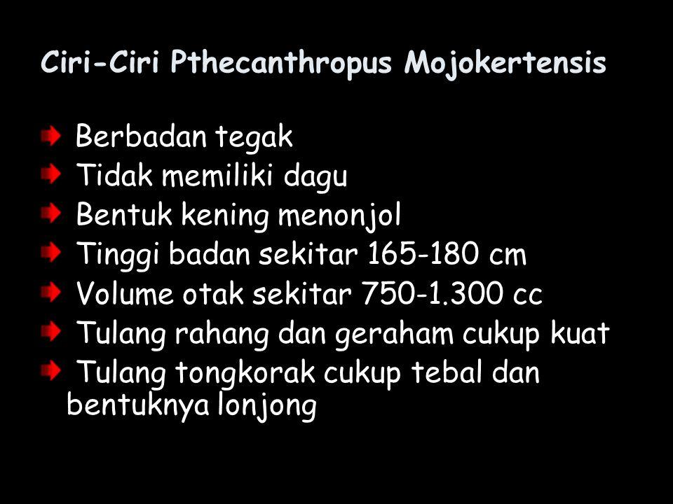 Ciri-Ciri Pthecanthropus Mojokertensis
