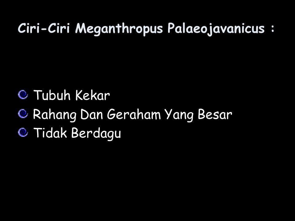 Ciri-Ciri Meganthropus Palaeojavanicus :