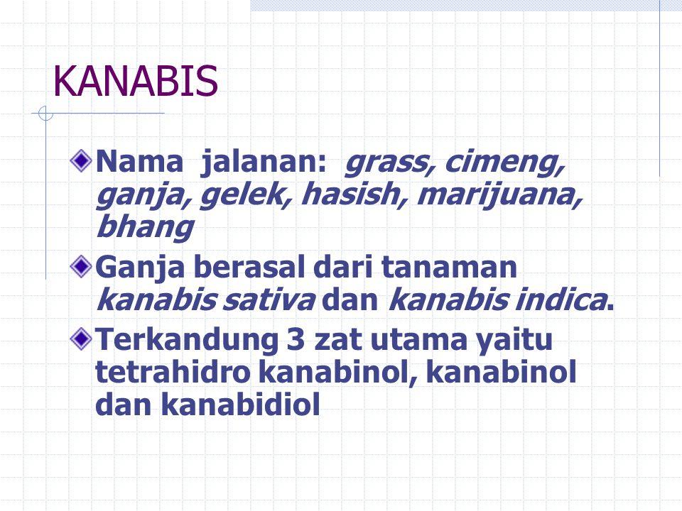 KANABIS Nama jalanan: grass, cimeng, ganja, gelek, hasish, marijuana, bhang. Ganja berasal dari tanaman kanabis sativa dan kanabis indica.