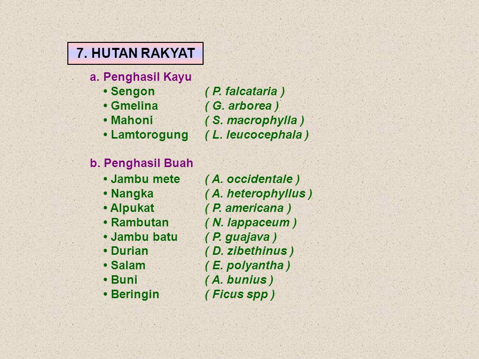 7. HUTAN RAKYAT a. Penghasil Kayu • Sengon ( P. falcataria )