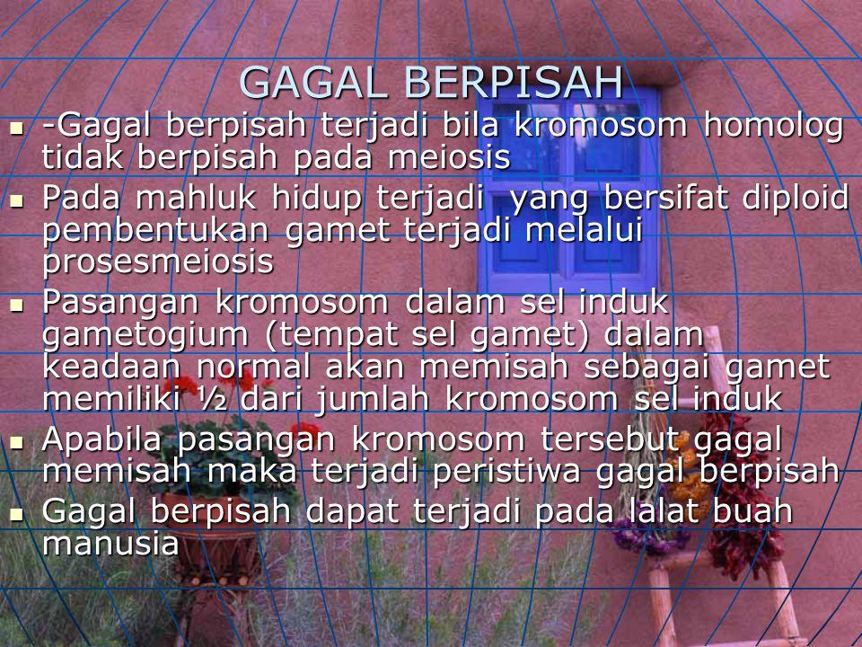 GAGAL BERPISAH -Gagal berpisah terjadi bila kromosom homolog tidak berpisah pada meiosis.