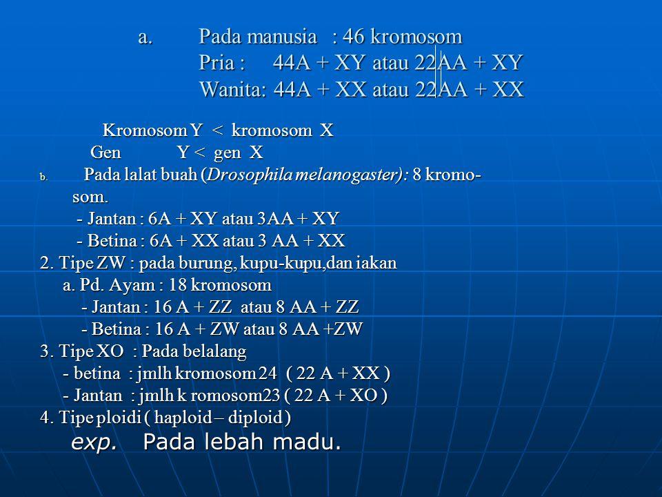 Kromosom Y < kromosom X