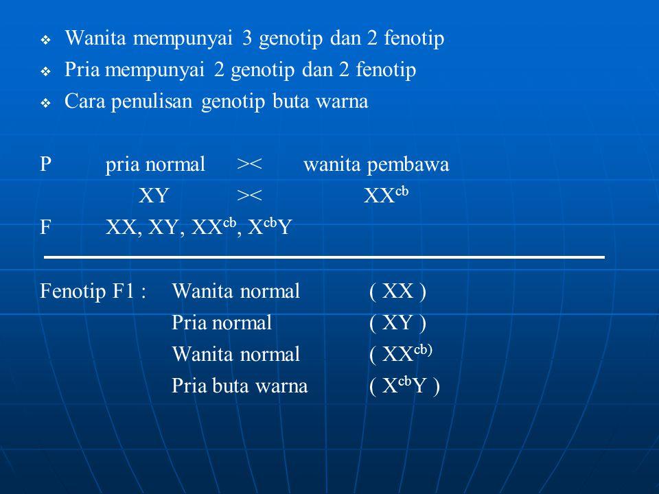 Wanita mempunyai 3 genotip dan 2 fenotip