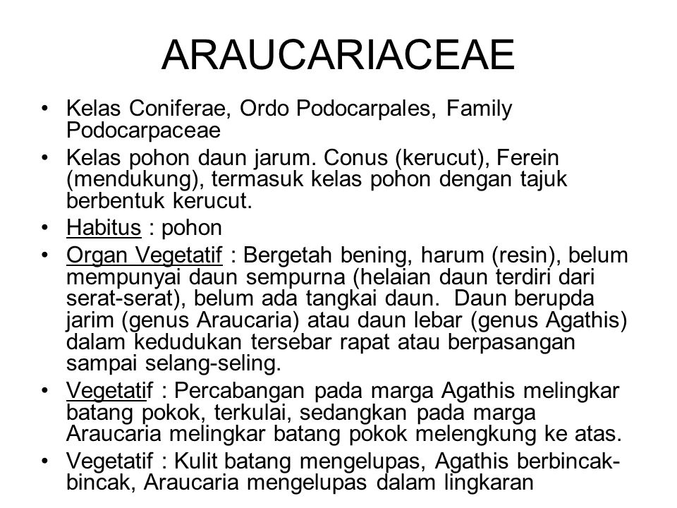ARAUCARIACEAE Kelas Coniferae, Ordo Podocarpales, Family Podocarpaceae