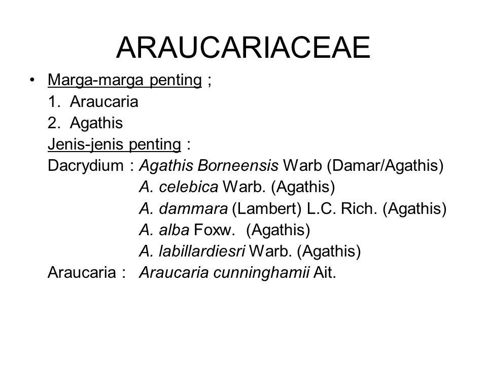ARAUCARIACEAE Marga-marga penting ; 1. Araucaria 2. Agathis