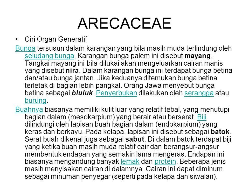 ARECACEAE Ciri Organ Generatif