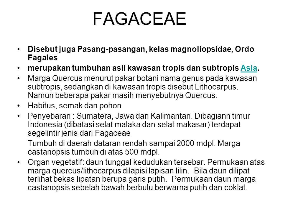 FAGACEAE Disebut juga Pasang-pasangan, kelas magnoliopsidae, Ordo Fagales. merupakan tumbuhan asli kawasan tropis dan subtropis Asia.