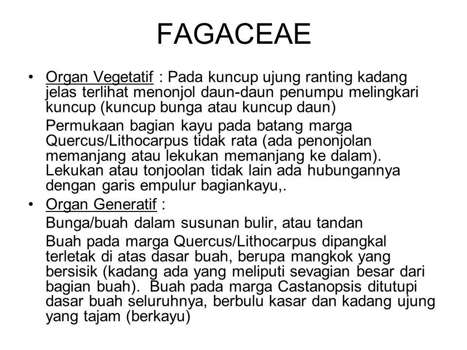 FAGACEAE