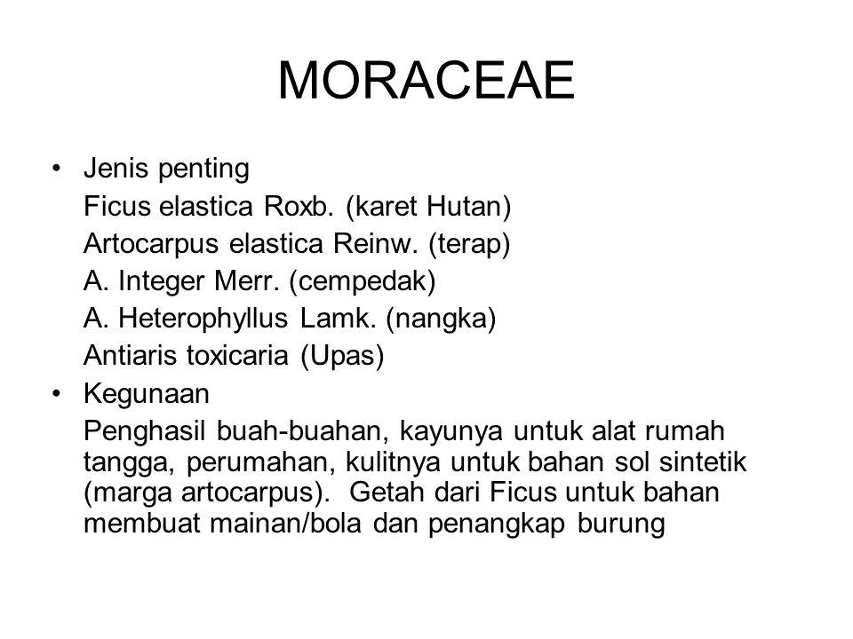 MORACEAE Jenis penting Ficus elastica Roxb. (karet Hutan)