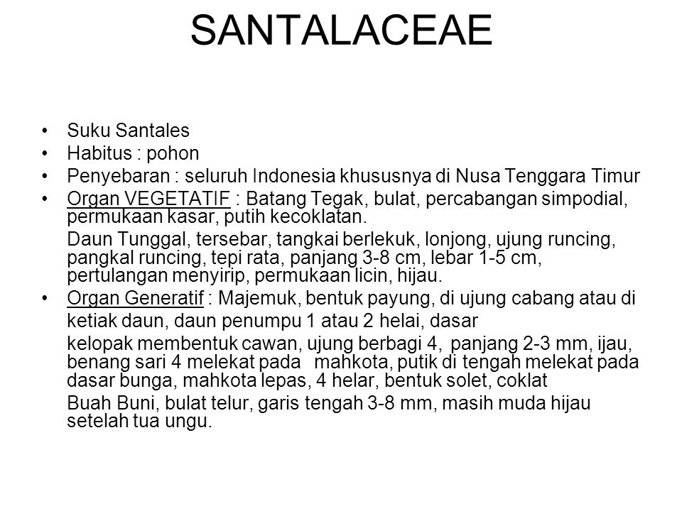 SANTALACEAE Suku Santales Habitus : pohon