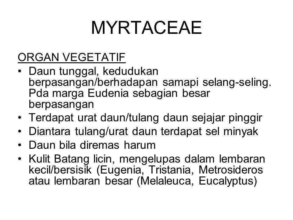 MYRTACEAE ORGAN VEGETATIF