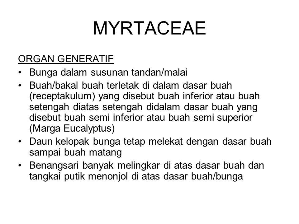 MYRTACEAE ORGAN GENERATIF Bunga dalam susunan tandan/malai