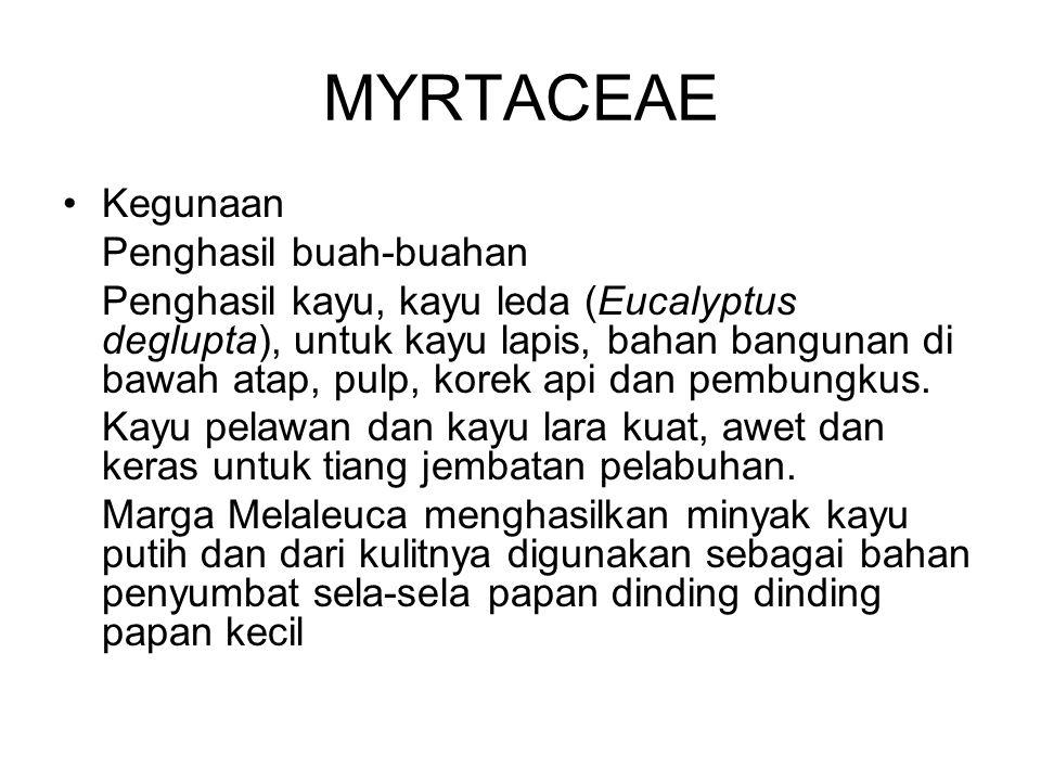 MYRTACEAE Kegunaan Penghasil buah-buahan