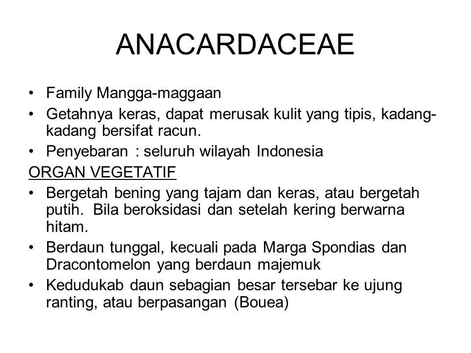 ANACARDACEAE Family Mangga-maggaan