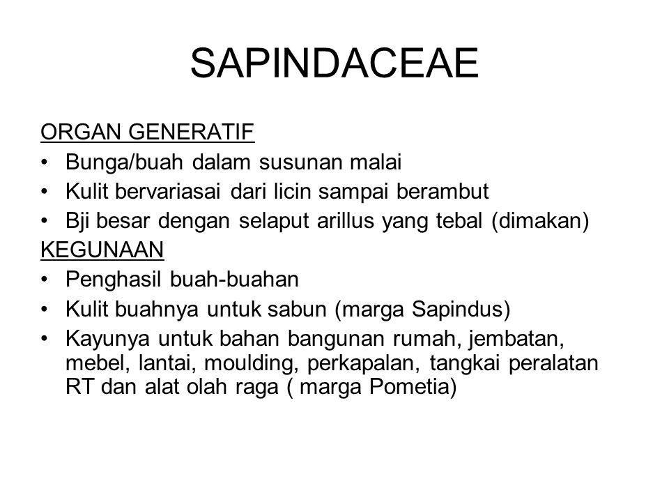 SAPINDACEAE ORGAN GENERATIF Bunga/buah dalam susunan malai