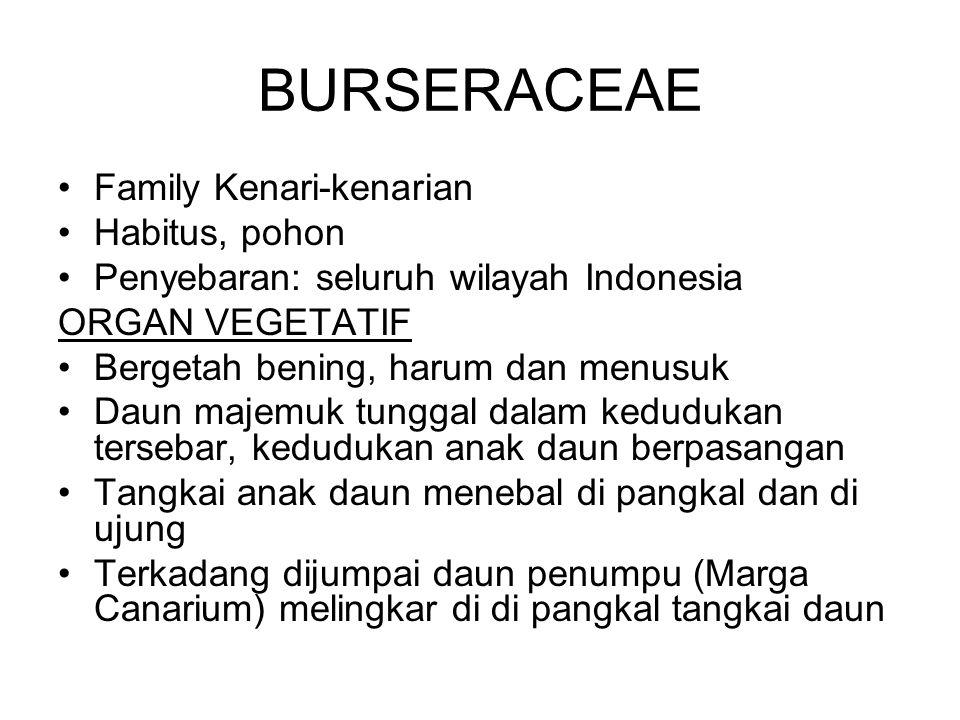 BURSERACEAE Family Kenari-kenarian Habitus, pohon