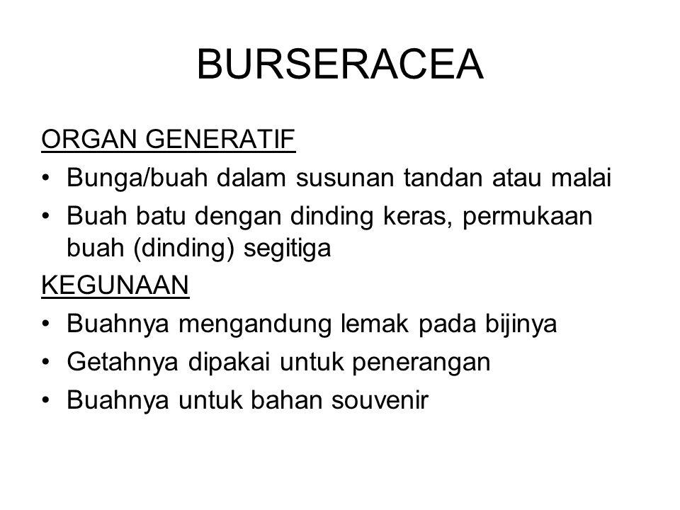 BURSERACEA ORGAN GENERATIF Bunga/buah dalam susunan tandan atau malai