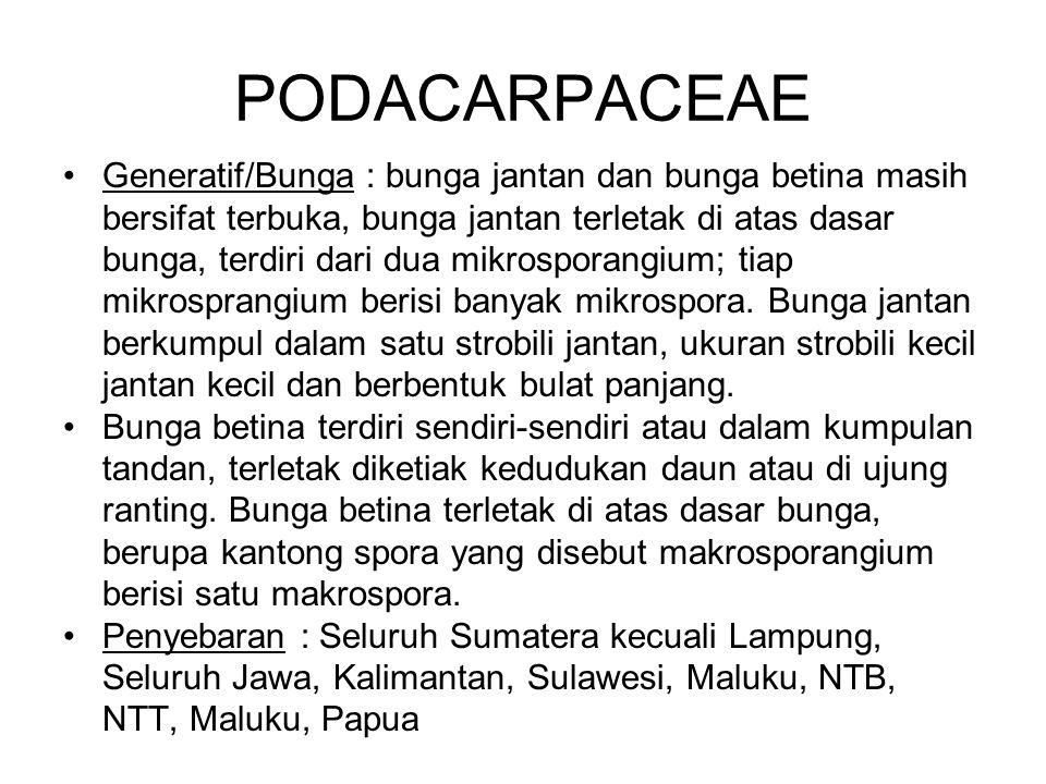 PODACARPACEAE