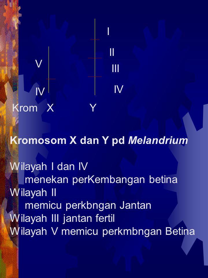 I II. V. III. IV. IV. Krom X Y. Kromosom X dan Y pd Melandrium. Wilayah I dan IV.
