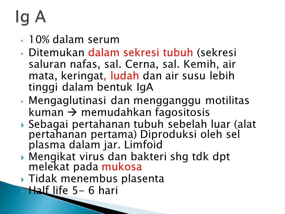 Ig A 10% dalam serum.