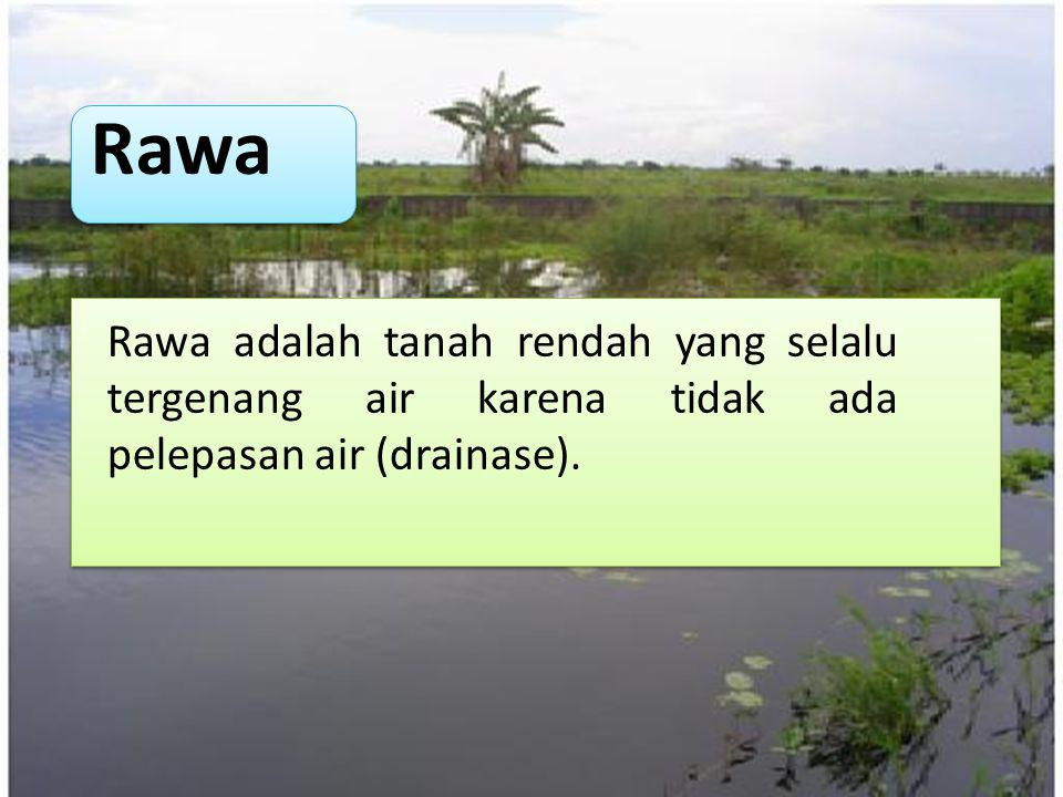 Rawa Rawa adalah tanah rendah yang selalu tergenang air karena tidak ada pelepasan air (drainase).