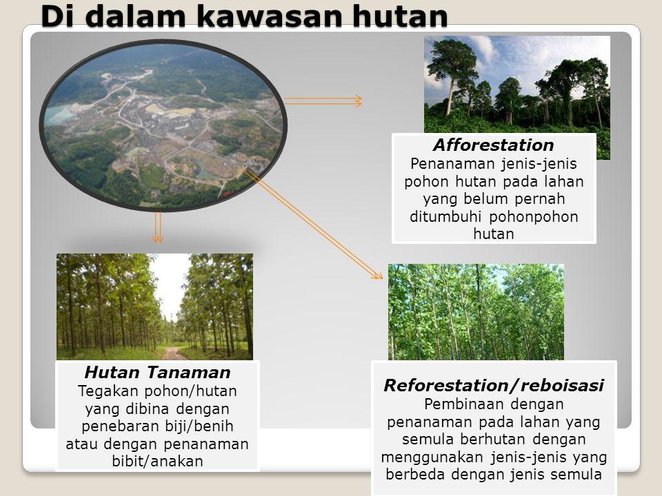 Reforestation/reboisasi