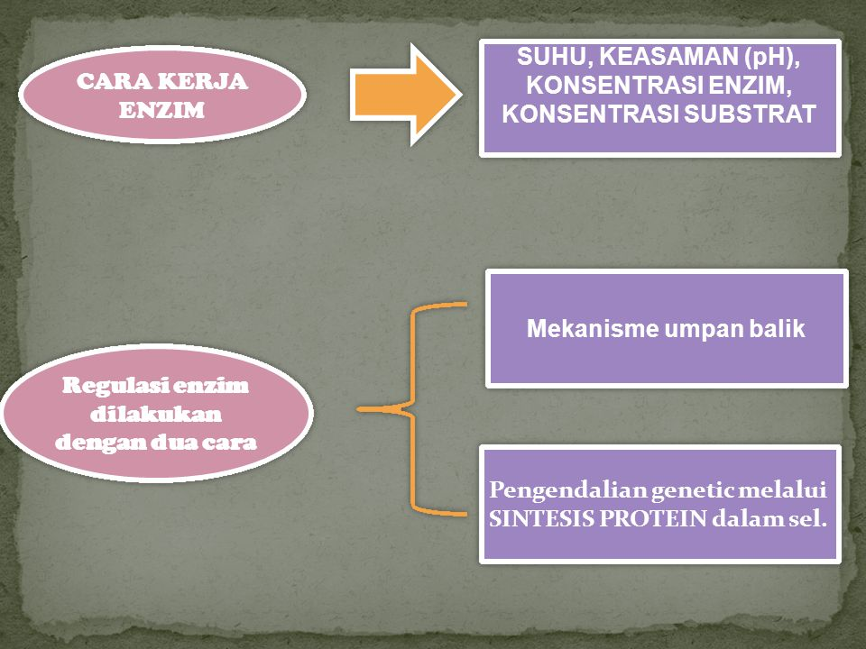 Regulasi enzim dilakukan dengan dua cara