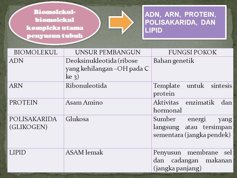 Biomolekul-biomolekul kompleks utama penyusun tubuh
