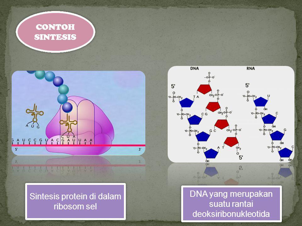 Sintesis protein di dalam ribosom sel