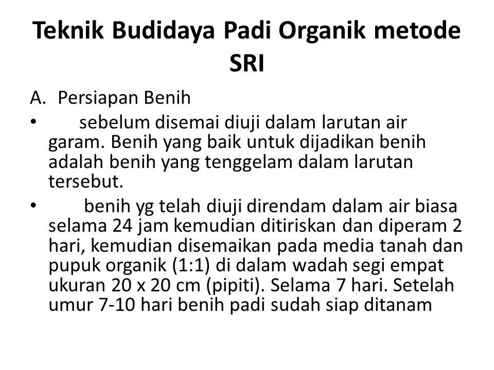 Teknik Budidaya Padi Organik metode SRI