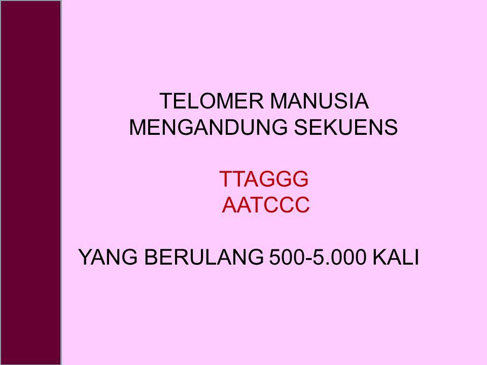 TELOMER MANUSIA MENGANDUNG SEKUENS