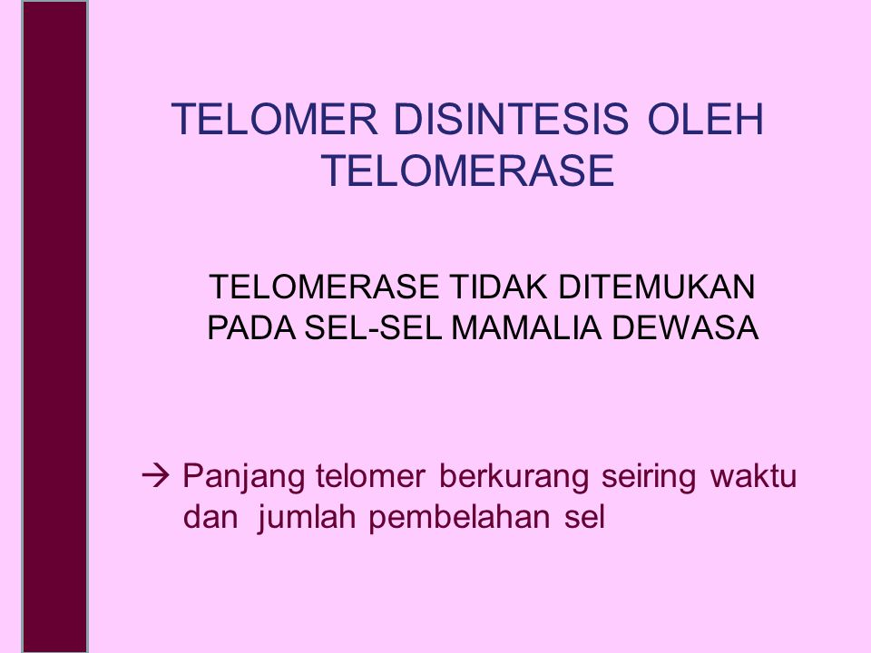 TELOMER DISINTESIS OLEH TELOMERASE