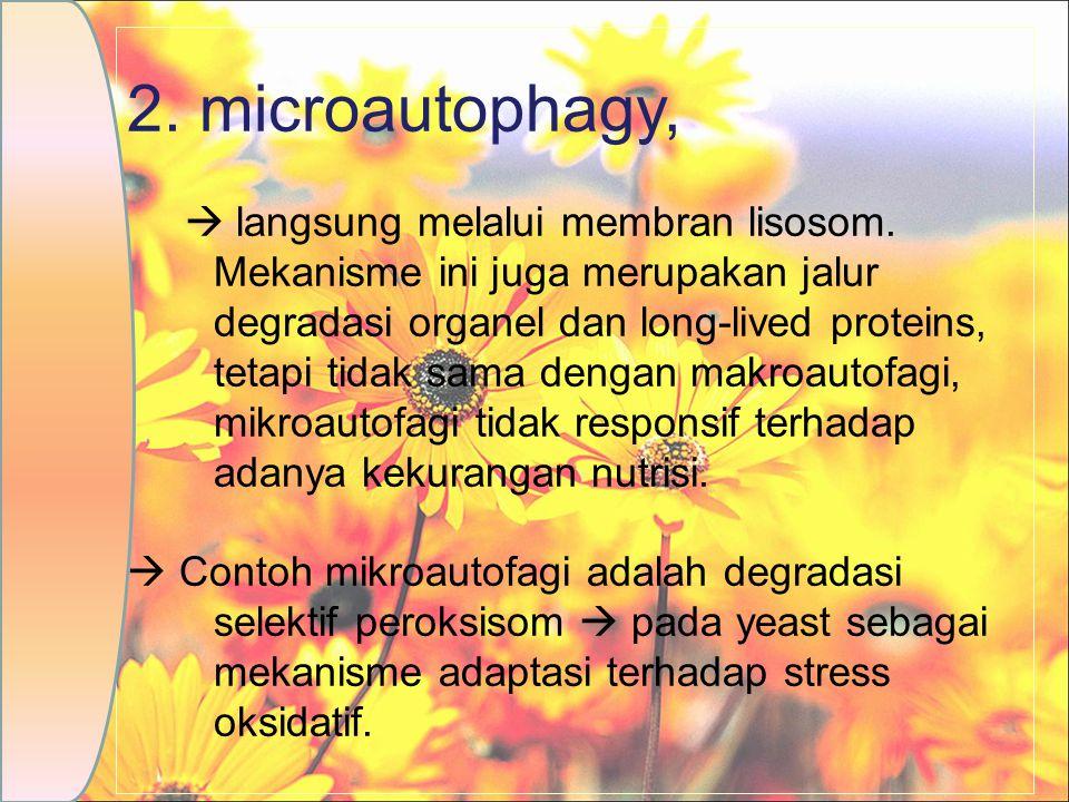 2. microautophagy,