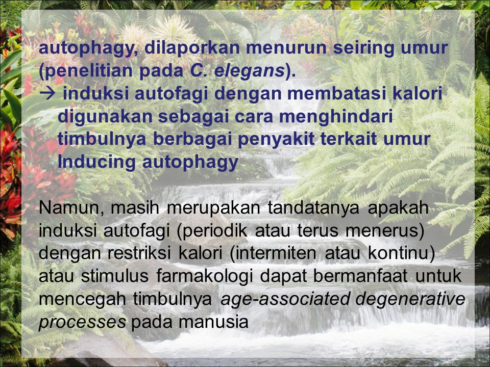 autophagy, dilaporkan menurun seiring umur (penelitian pada C. elegans).